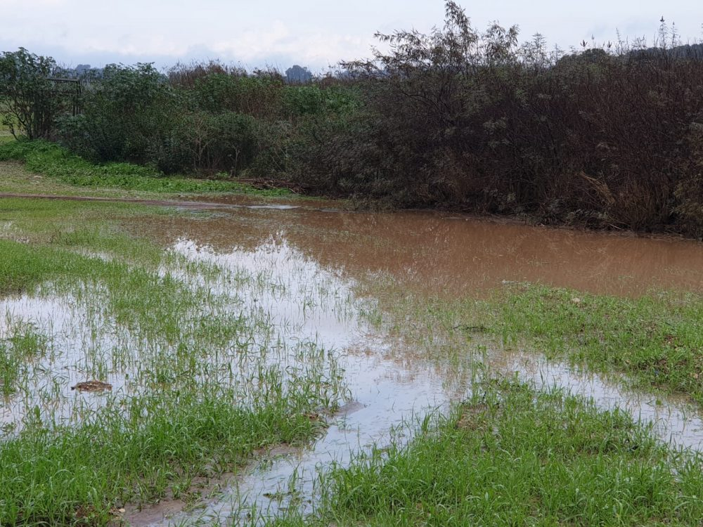 גשמים כאלה מזיקים לחקלאות [כתבה]