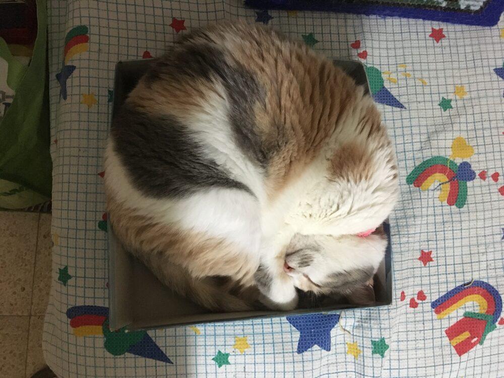 חתולה בקופסה. צילום רחלי ווקס