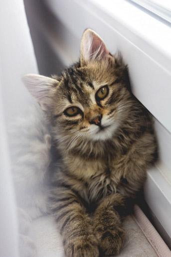 חתולים נגד אסתמה [כתבה]