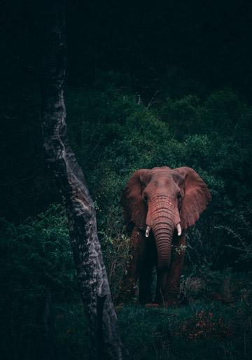 על פילים ופלפלים [כתבה]